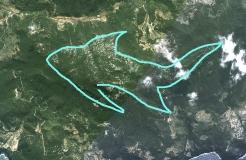 Chakra 2. Silueta de pez, animal acuático. El emento agua es propio del segundo Chakra