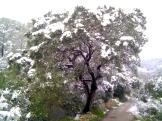 Imagen del guardián en invierno 2012