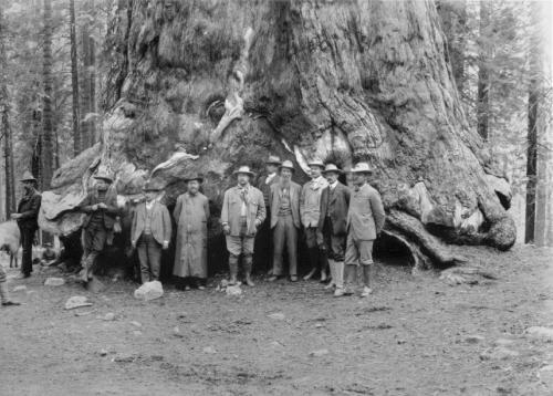 John Muir junto al presidente Roosevelt posan delante de una impresionante sequoia milenaria.