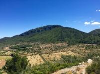 El pla del Rei, visto desde el Puig de sa Moneda